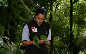 Feeding Red Crowned Kakariki At Otorohanga Kiwi House And Native Bird Park