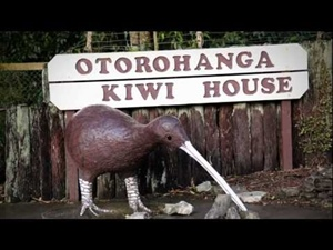 Otorohanga Kiwi House Video Gallery