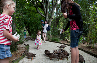 Bring the kids and help feed the ducks - Otorohanga Kiwi House