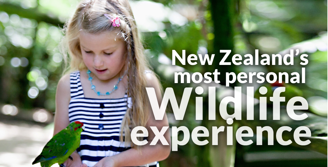New Zealands Most Personal Wildlife Experience - Otorohanga Kiwi House