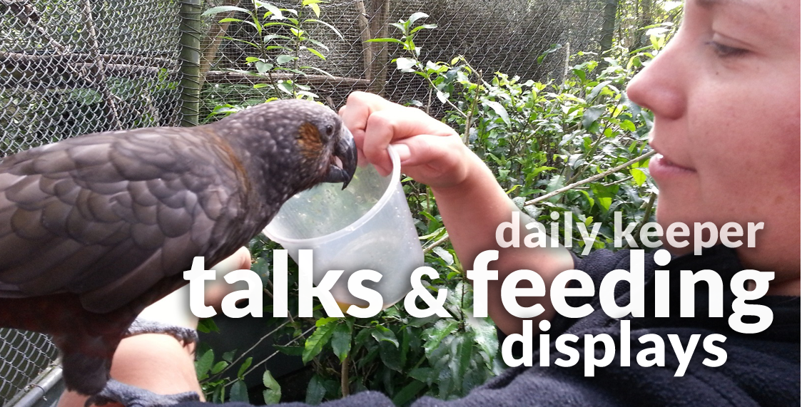 Daily Keeper Talks and Feeding Displays